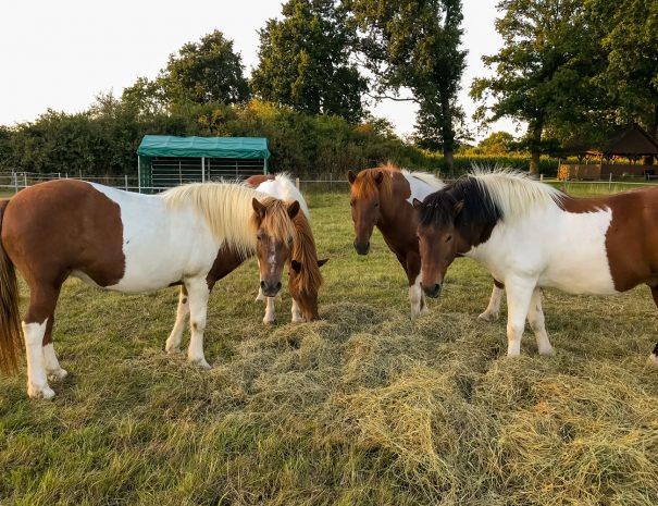 Thorandhof-Pferde-Ferienwohnung.jpg